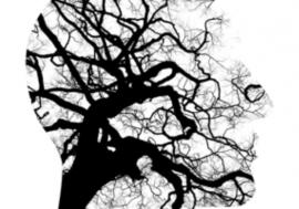 Le cerveau et la neuro-pédagogie digitale – Partie I